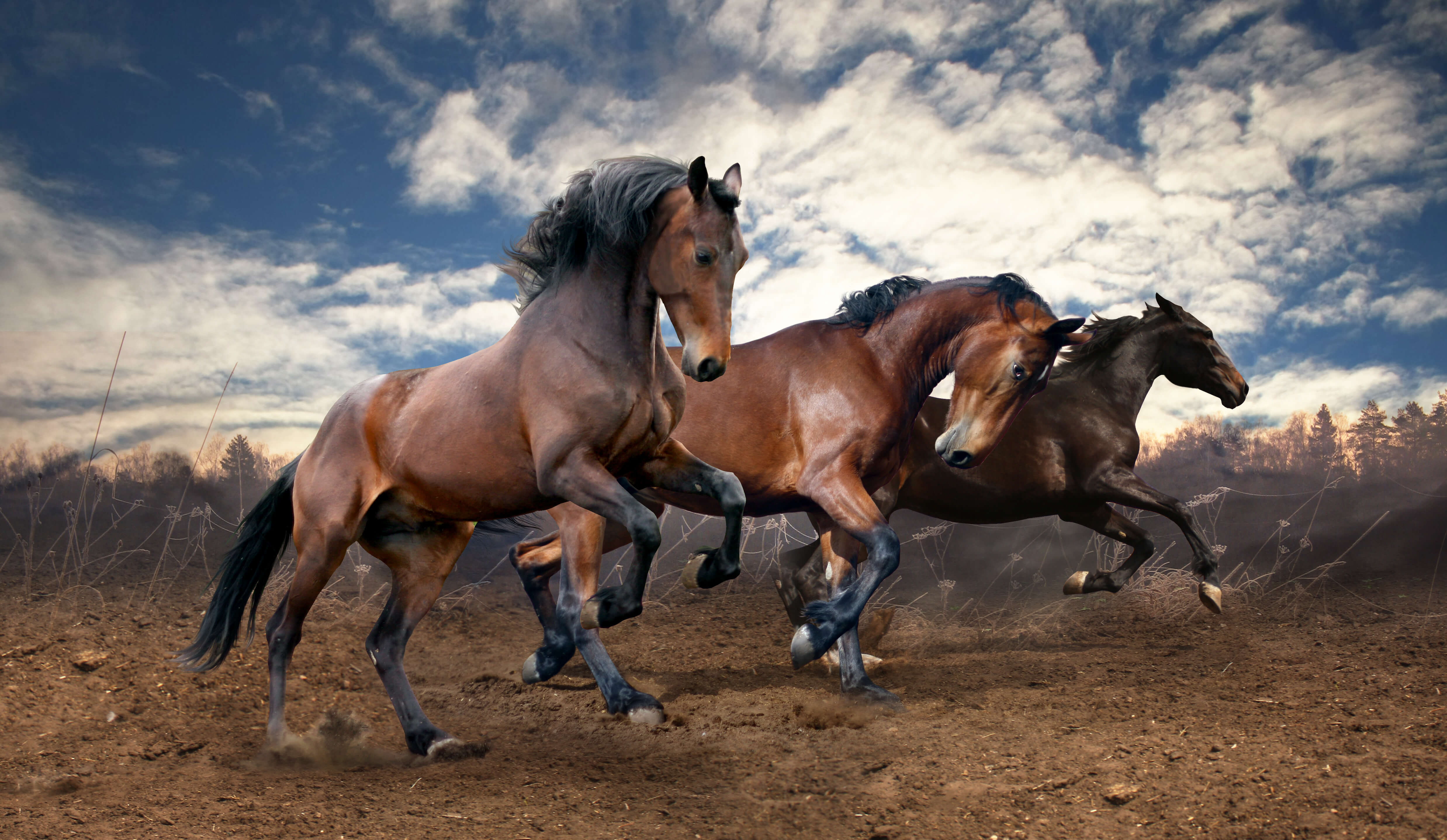 Three horses running