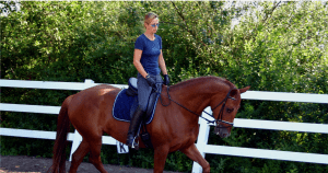 Posture on Dressage Horse