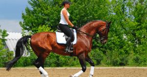 Dressage Rider Posture