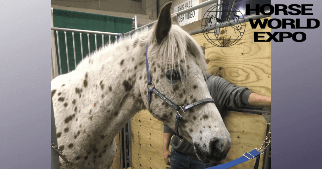 horse business expo