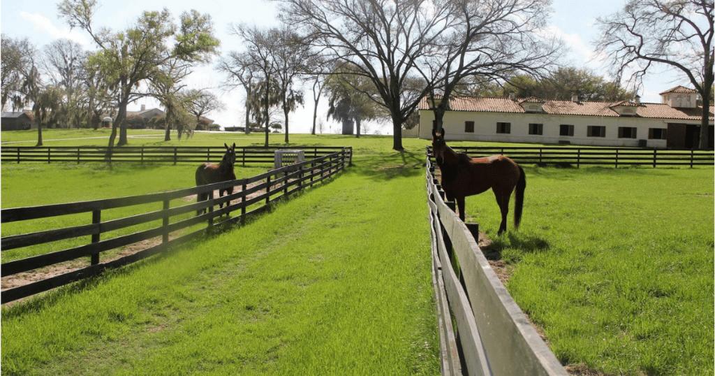 Email Marketing & Facebook Ads Equestrian
