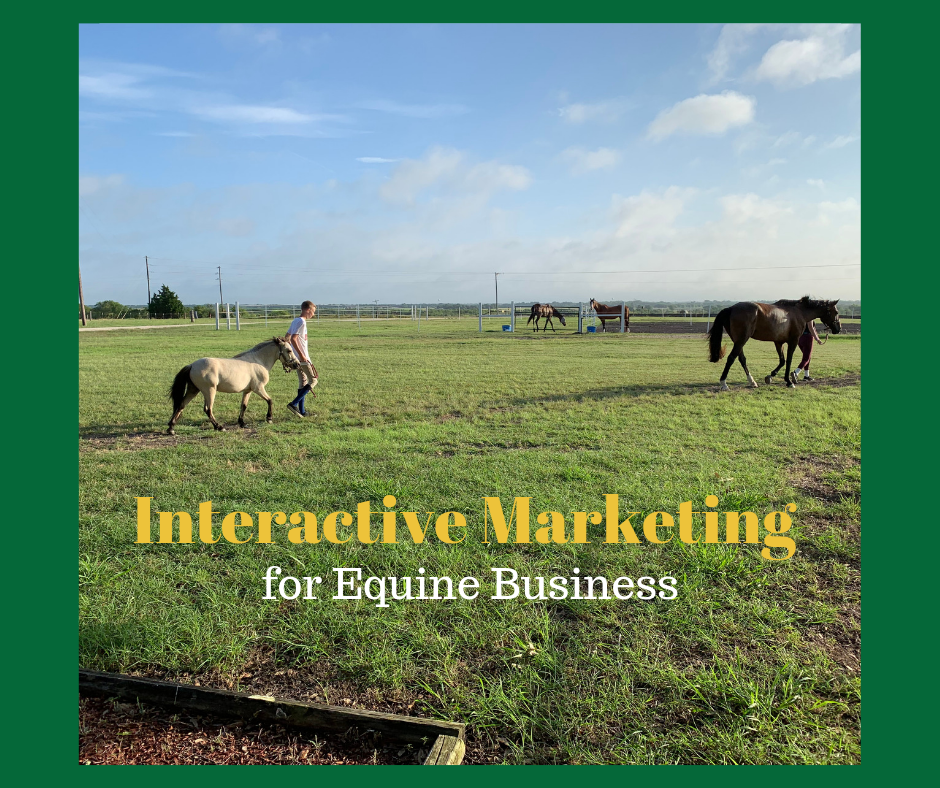 Interactive Marketing for Equine Business
